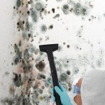 Black-Mold-Remediation-Pleasant Hill