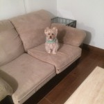 Pleasant Hill-Sofa-Pet-Stain-Cleaning