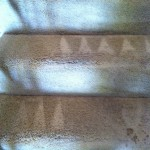 Pleasant Hill-Stairs-Carpet-Cleaning